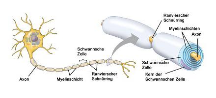 Neuroaxonale Schäden durch COVID-19 auch bei leichteren Verläufen